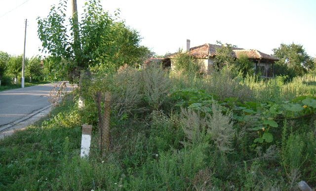 2003_0626Zlatiya0007