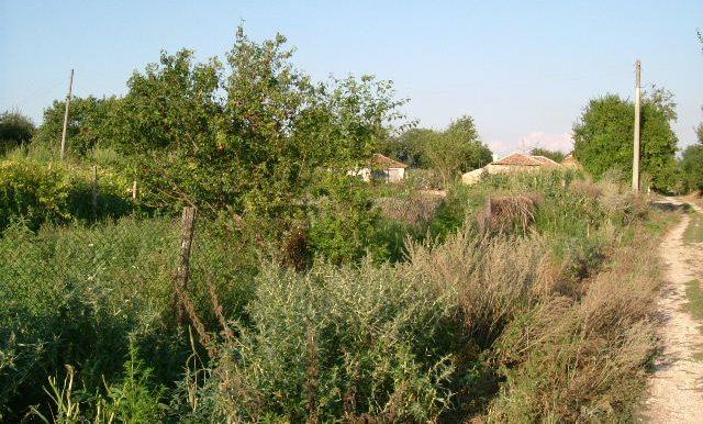 2003_0626Zlatiya0010