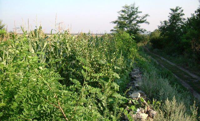 2003_0626Zlatiya0015
