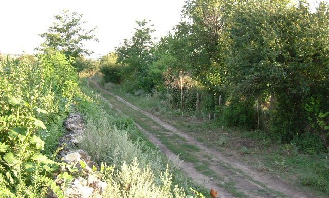 2003_0626Zlatiya0017
