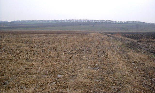 2005_1201(008)