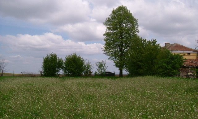 2006_0429(018)