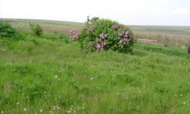2006_0509(030)