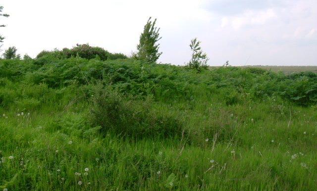 2006_0509(031)