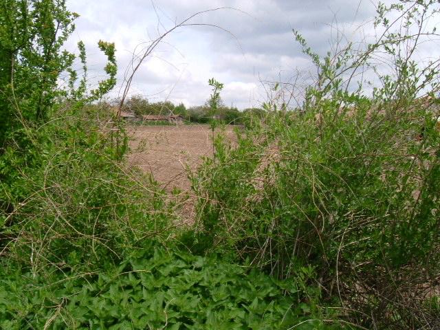 Land in Vedrina, Dobrich (Ref: RF330)