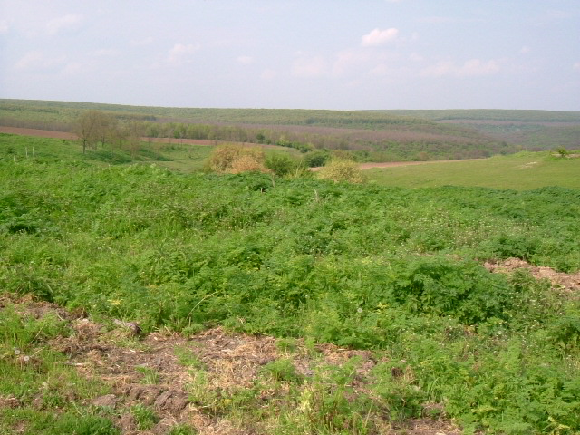Land in Dryanovets, Dobrich (Ref: RF343)