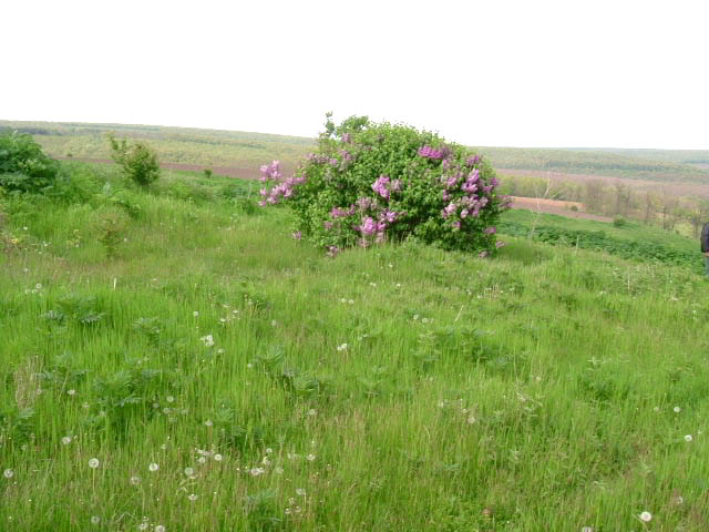 Land in Dryanovets, Dobrich (Ref: RF344)