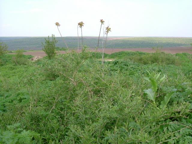 Land in Dryanovets, Dobrich (Ref: RF342)